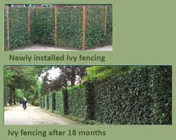 Buy Ivy Screen Fencing Panels By Wholebuild Wholebuild Uk Fence Landscaping Backyard Fences Green Fence