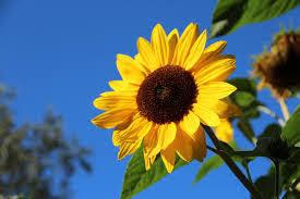 bunga beserta filosofi dan makna no kesukaan nya raditya dika
