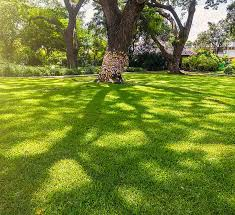 affordable lawn care maintenance