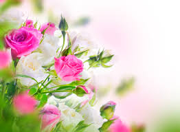 Обои Цветы Розы, обои для рабочего стола, фотографии цветы, розы ...
