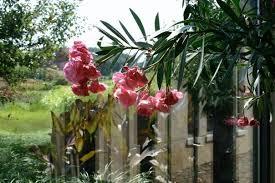tree nia through glass flower on