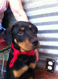 puppy dog at tin shed dog friendly