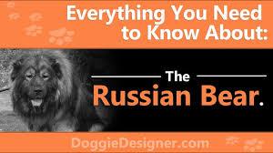 russian bear dog caucasian shepherd