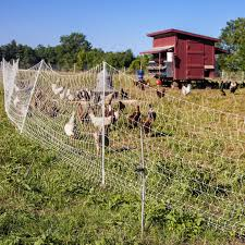 6 Electric Fencing Tips And Ideas Successful Farming