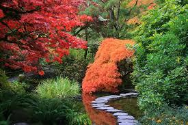 japanese gardens dear plants