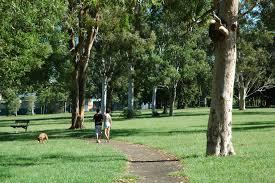 10 Best Dog Parks Around Brisbane Must Do Brisbane
