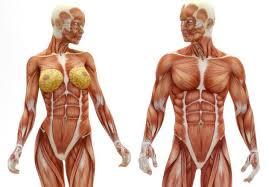 26 Cosas que te van a hacer cuestionar todo lo que sabés sobre tu cuerpo |  El Kilombo News