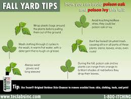 how to avoid poison ivy in the fall