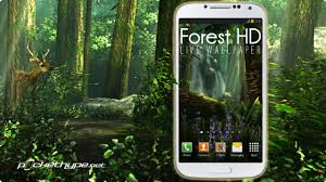 forest hd live wallpaper you