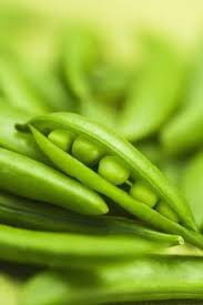 environment to grow alaskan pea plants
