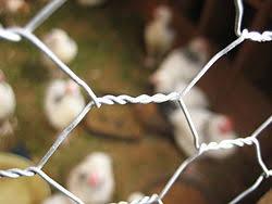 Chicken Wire Wikipedia