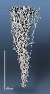 De l'aluminium dans des fourmilières | Colonie de fourmis, Art ...