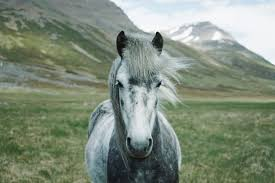 22 of the best horse wallpapers for