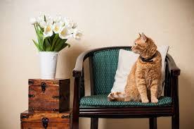 diy cat sn odor remover that