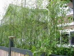 bamboo gardener llc services