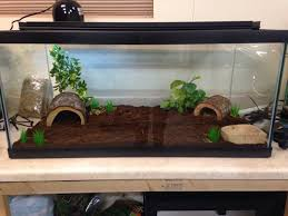how to create a corn snake vivarium