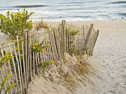 Environment Beach Ocean Sea Water Sand Dunes Fence Bush The National Law Forum