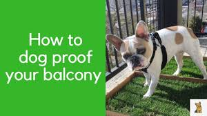 How To Dog Proof Your Balcony Youtube