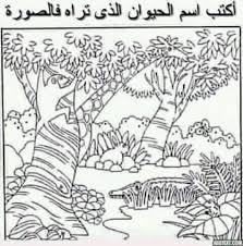 صور مضحكة Gif لو عندك قوة ملاحظة اكتب كم حيوان في الصورة