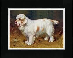 wine art clumber spaniel dog poster 4x6