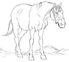 Paard In De Wei Kleurplaat Gratis Kleurplaten Printen