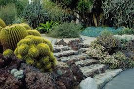 cactus plants to grow in your garden