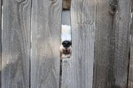 Dog Nose Through Fence Picture Free Photograph Photos Public Domain