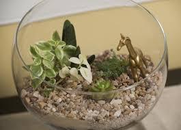 a guide to making a succulent terrarium