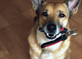 tips for stress free dog nail trims