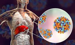 Proteins vital for hepatitis B infection discovered by researchers