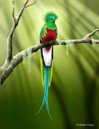 Guatemala Quetzal | in 2001 michel decided to conquer another ...