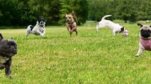 Clark County S Best Off Leash Dog Parks Go With Ro