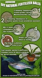 diy natural fertilizer for