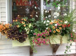 container gardening yn s shade
