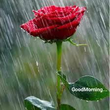 happy rainy day photography mi