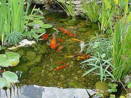 keeping pond water clear hollywood