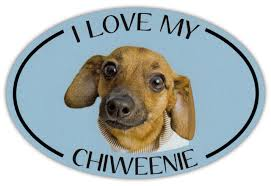 Oval Dog Breed Picture Car Magnet I Love My Chiweenie Bumper Sticker Decal Ebay
