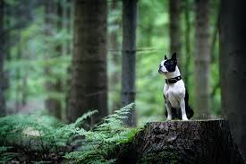 wallpaper dog pet cute beautiful