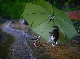 beautiful rain rainy day wallpaper hd