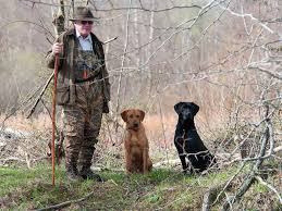 Is The Shock Collar On Your Bird Dog Good Bad Or Both Field Stream