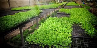 homemade hydroponics gardening system