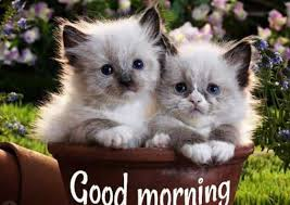 good morning images good morning gif