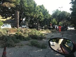 Verona, un filobus di ignoranza verde