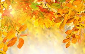 autumn leaves colorful background