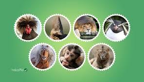 صور مضحكة لحيوانات بتسريحات شعر شبيهة بالبشر روت