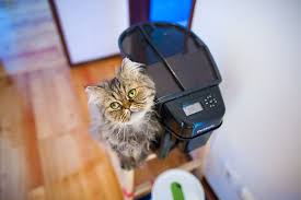 timed cat feeders preventing hunger