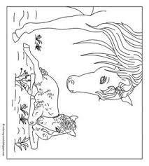 Mewarn11 Paarden Kleurplaate