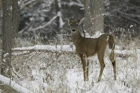 Preschoolers can learn how animals survive winter at free program at Columbia Bottom Jan. 21 | Missouri Department of Conservation