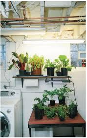 find your indoor kitchen garden