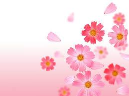 خلفيات ناعمة الصوره وتكملتها بافضل الخلفيات مساء الورد